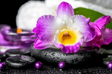 spa background of orchid dendrobium, green leaf Calla lily, purp
