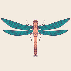 Vector colorful illustration of dragonfly