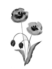 Poppy flowers, watercolor illustration in black and white