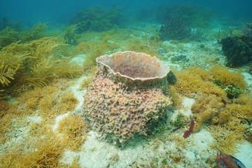 Underwater creature Giant barrel sponge