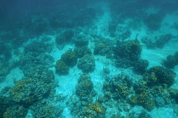Underwater landscape over a Caribbean coral reef