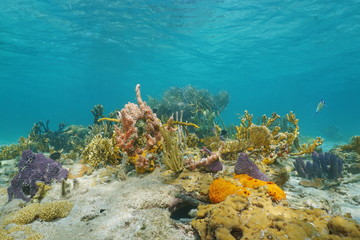 Underwater on a colorful seabed in the Caribbean