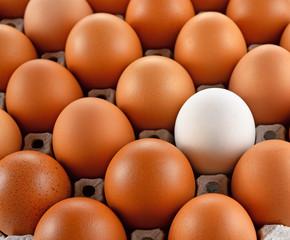 Closeup of white egg laying block pape