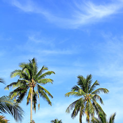 blue sky with green leaf palm and cloud