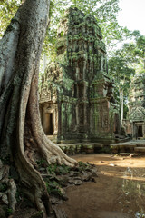The ruins of Ta Prom Temple,  Angkor Historical Park, Cambodia.