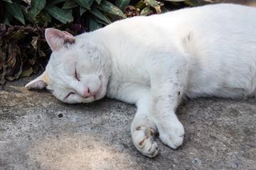 stray cat sleeping on the floor