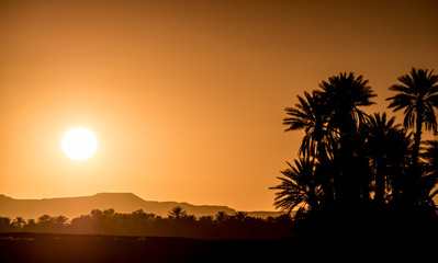 Palm Silhouettes over sunset in the desert.