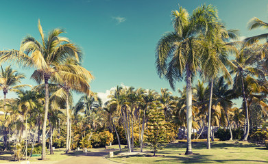Coconut palm trees over blue sky, toned photo