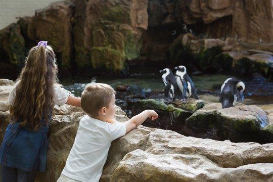 Little siblings looking at penguins