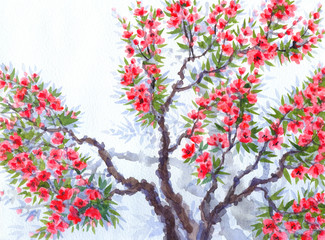 Watercolor background. Red flowers of spring tree