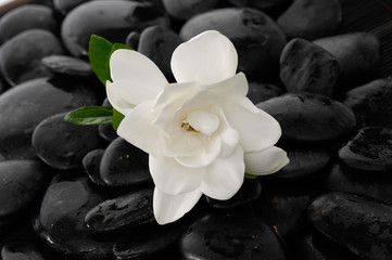Gardenia with leaf and black stones background