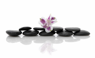 Still life with orchid on black stacked stones