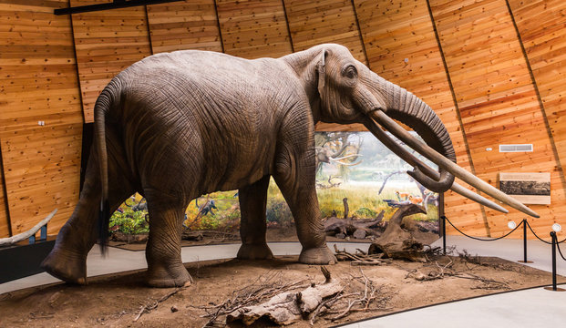 The Rhodopean mastodon,Anancus arvernensis, Bulgaria