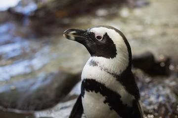 Penguins in their enclosure