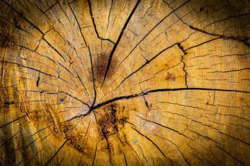 Foto op Canvas Paardebloemen en water tree stump texture