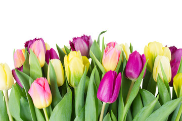 bouquet of  yellow and purple  tulip flowers
