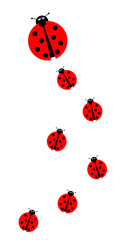 Many Ladybugs