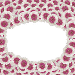 Wall Mural - gerbera flower