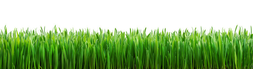 Photo sur Aluminium Herbe perfect grass isolated for spring border