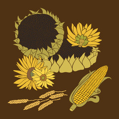 Sunflower and Corn vector greeting card on the dark background