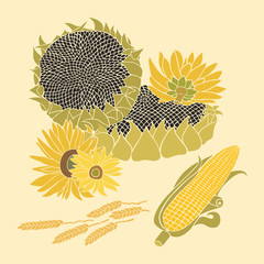 Sunflower and Corn vector greeting card on the bright background