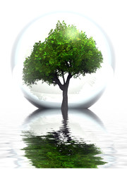 Green tree in a bubble and water