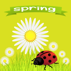 spring background with dandelions and ladybug