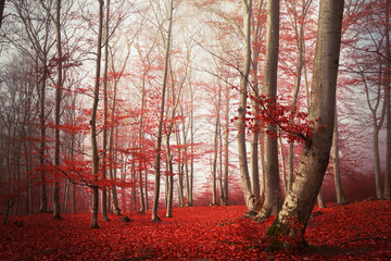 Red leaves in the forest