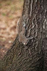 grey squirrel sitting on the tree