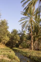 Plantation of the date palm Ksar Ghilane Desert Oasis Tunisia