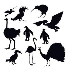 Exotic Birds Silhouettes