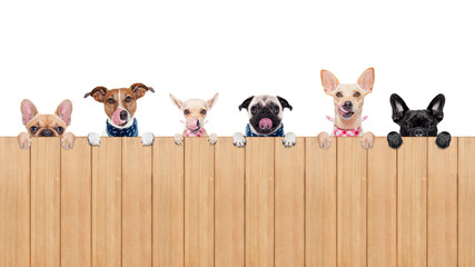 hungry dogs Wall mural
