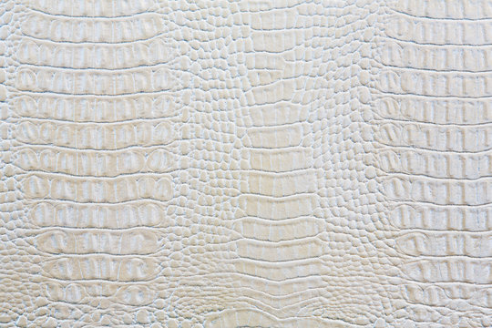 Crocodile skin white leather background