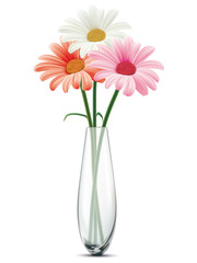 Daisy in a glass vase on a white isolated. Vector illustration