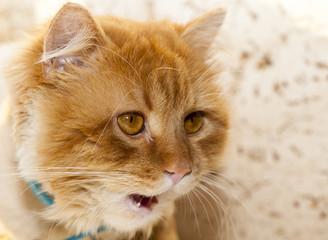 Cat Gargield