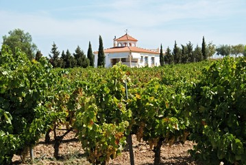 Spanish vineyard, Montilla © Arena Photo UK