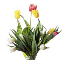 tulips on white background