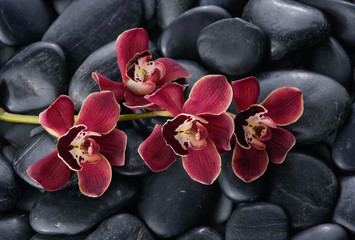 beautiful gorgeous red branch orchid on wet back stones background