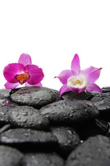 Still life with two pink orchid on wet zen stones