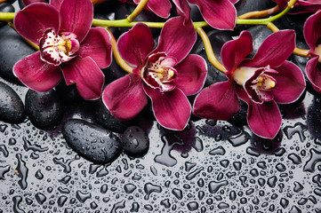 branch red orchid and black pebbles on wet background