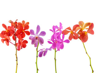 four colorful orchid with stem isolated on black background