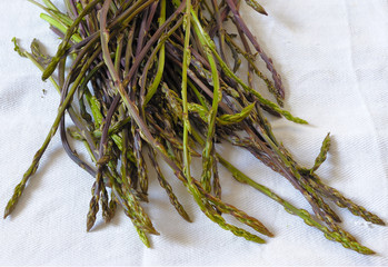 A bunch of freshly picked wild asparagus on a white canvas