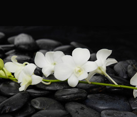 beautiful branch white orchid on wet back stones background