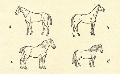 Horse breeds: hot (a), warm (b) and cold blood (c, d)