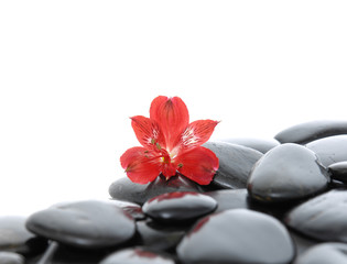 beautiful red orchid and back stones background