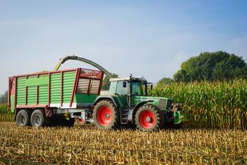 Wall Mural - Maisernte, Ackerschlepper mit Erntewagen auf dem Feld