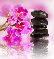 beautiful gorgeous orchid and wet stones - fototapety na wymiar
