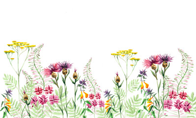 Meadow flowers. Watercolor hand drawn