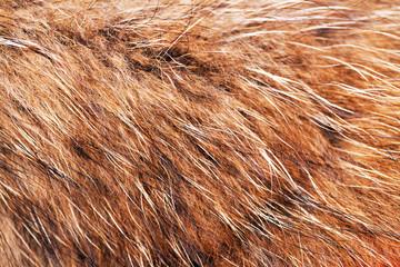 animal fell texture