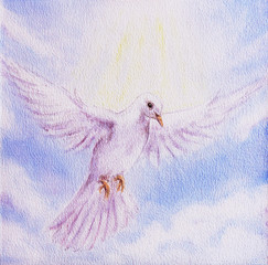 Dove portrait, white radiant holy flying peace symbol, colorful